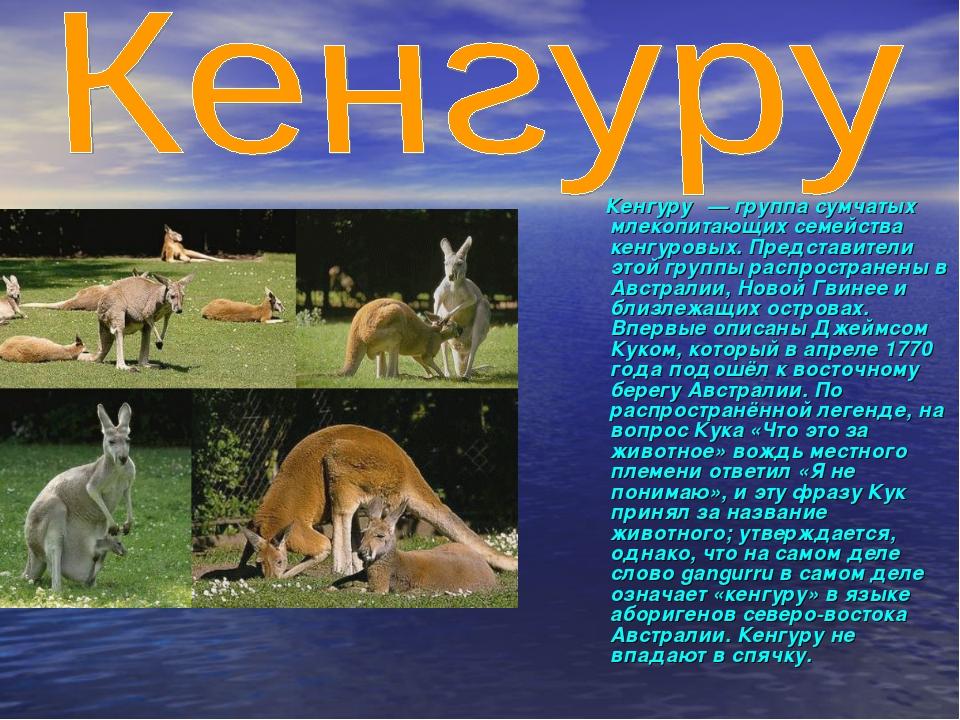 Кенгуру́— группа сумчатых млекопитающих семейства кенгуровых. Представители...