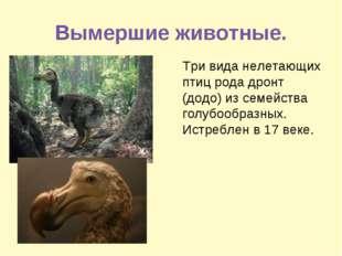 Вымершие животные. Три вида нелетающих птиц рода дронт (додо) из семейства го