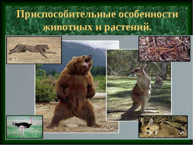 Приспособительные особенности животных и растений.