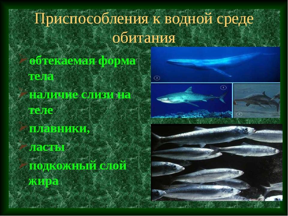 Приспособления к водной среде обитания обтекаемая форма тела наличие слизи на...