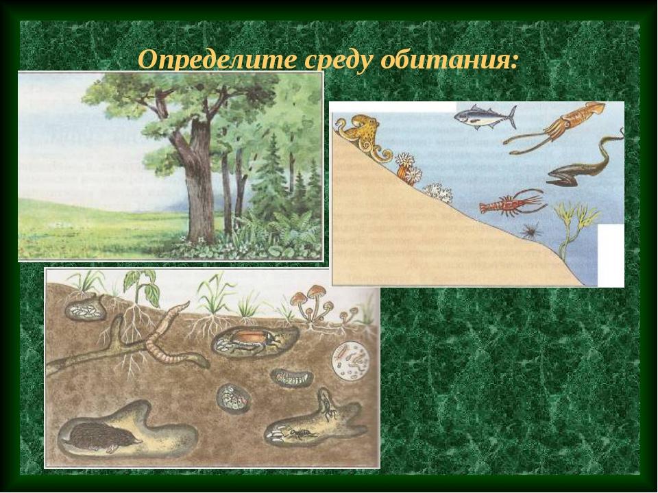 Определите среду обитания: