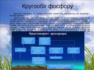 Кругообіг фосфору Кругообіг фосфора, як і інших біогенних елементів, відбува