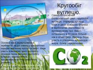 Кругообіг вуглецю. Самий інтенсивний біогеохімічний цикл - кругообіг вуглецю