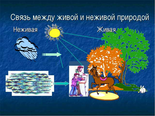 Связь между живой и неживой природой Неживая  Живая