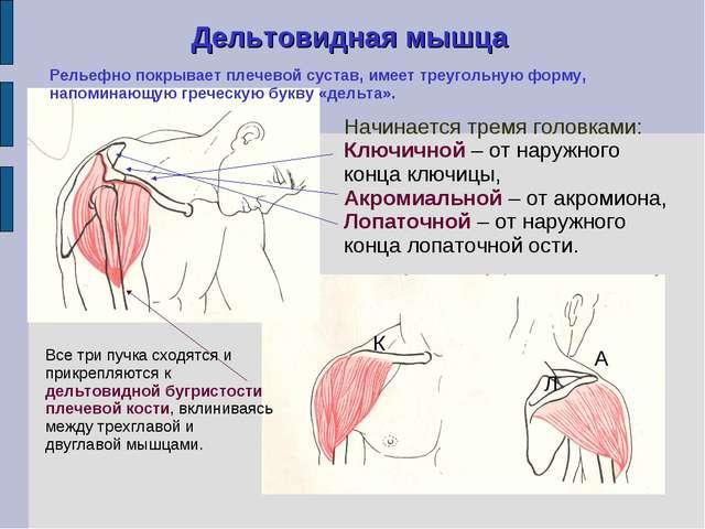 Как сделать себе рельефные мышцы