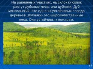 На равнинных участках, на склонах сопок растут дубовые леса, или дубняки. Ду