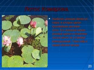 Лотос Комарова. Наиболее ценными являются озёра, в которых цветет красивейшее