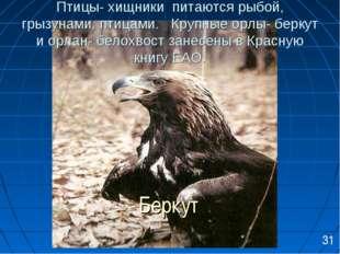 Птицы- хищники питаются рыбой, грызунами, птицами. Крупные орлы- беркут и орл