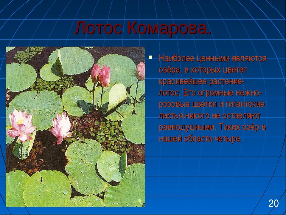 Лотос Комарова. Наиболее ценными являются озёра, в которых цветет красивейшее...