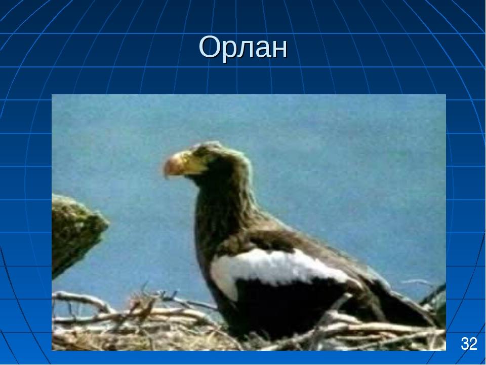 Орлан 32