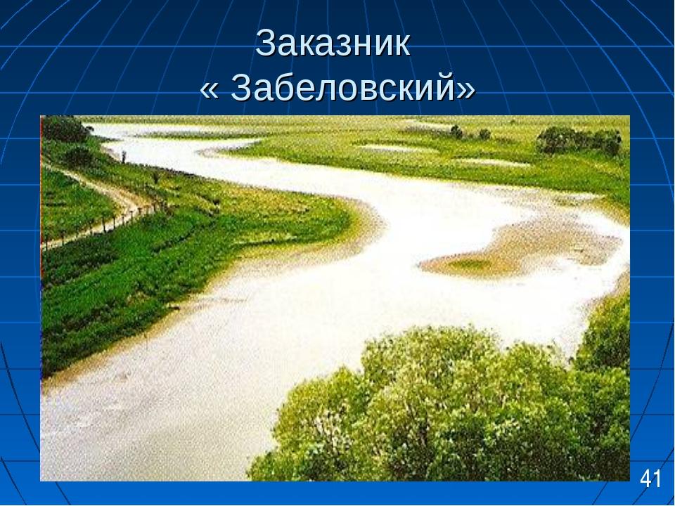 Заказник « Забеловский» 41