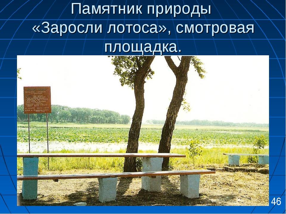 Памятник природы «Заросли лотоса», смотровая площадка. 46
