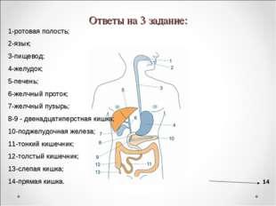 Ответы на 3 задание: 1-ротовая полость; 2-язык; 3-пищевод; 4-желудок; 5-печен
