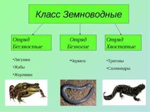 Класс Земноводные Отряд Бесхвостые Отряд Безногие Отряд Хвостатые Лягушки Жаб