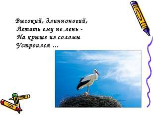 Высокий, длинноногий, Летать ему не лень - На крыше из соломы Устроился ...