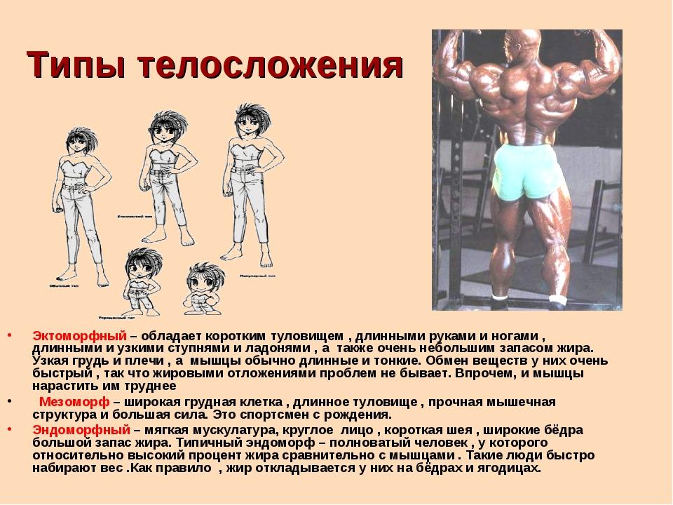 Типы телосложения Эктоморфный – обладает коротким туловищем , длинными руками...