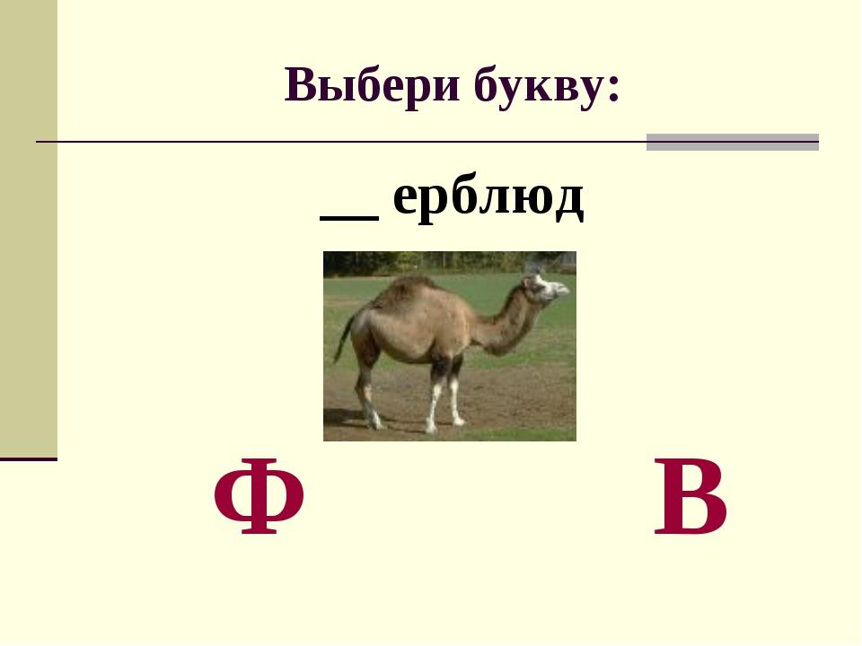 Выбери букву: __ ерблюд Ф В
