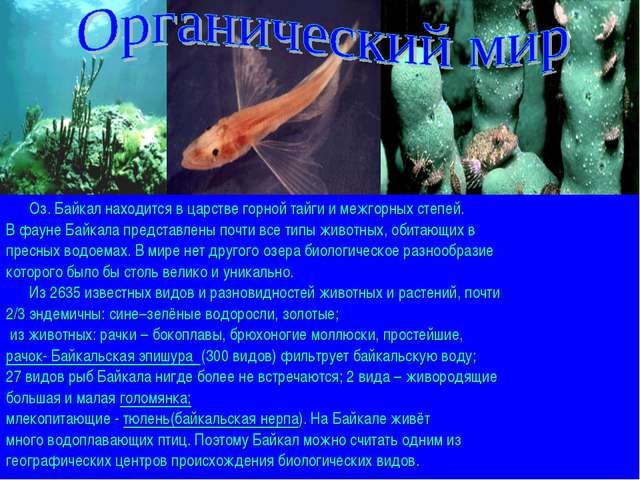 Оз. Байкал находится в царстве горной тайги и межгорных степей. В фауне Байк...