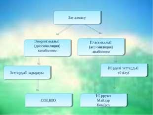 Зат алмасу Энергетикалық (диссимиляция) катаболизм Плассикалық (ассимиляция)