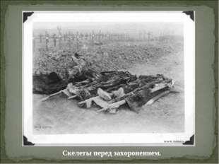 Скелеты перед захоронением.