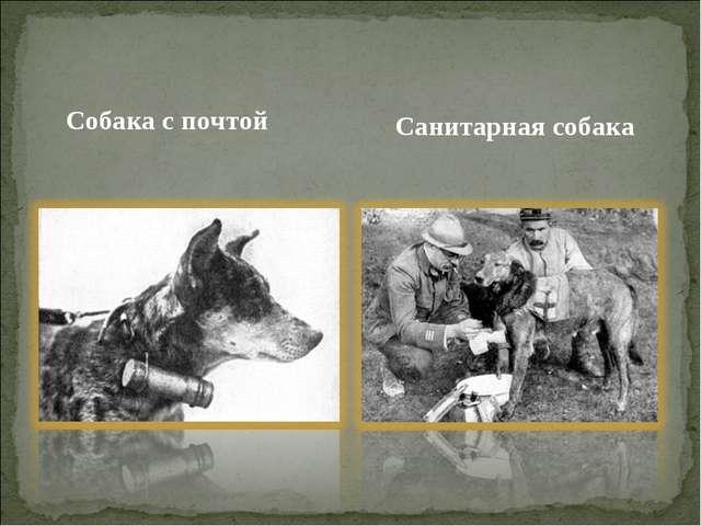 Собака с почтой Санитарная собака