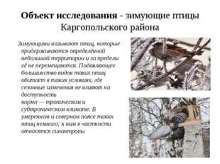 Объект исследования - зимующие птицы Каргопольского района Зимующими называют