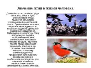 Домашних птиц разводят ради мяса, яиц, пера и пуха. Промысловые птицы являютс