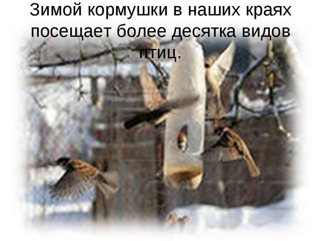 Зимой кормушки в наших краях посещает более десятка видов птиц.