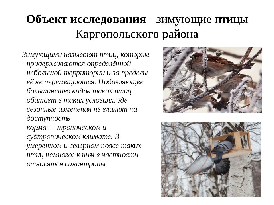 Объект исследования - зимующие птицы Каргопольского района Зимующими называют...
