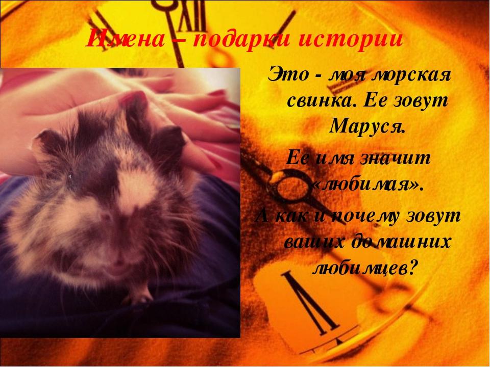 Имена – подарки истории Это - моя морская свинка. Ее зовут Маруся. Ее имя зна...
