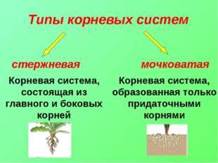 Корневая система, образованная только придаточными корнями Корневая система,