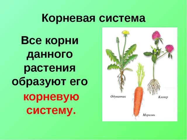 Корневая система Все корни данного растения образуют его корневую систему.