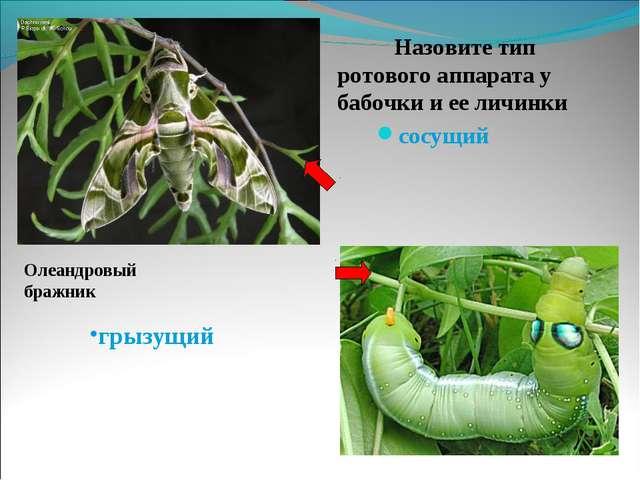 Назовите тип ротового аппарата у бабочки и ее личинки    Назовите тип ротово...