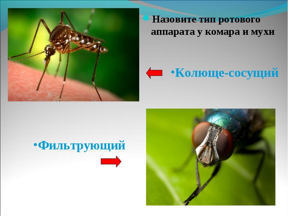 Назовите тип ротового аппарата у комара и мухи Назовите тип ротового аппарат...
