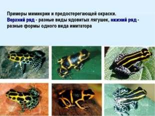 Примеры мимикрии и предостерегающей окраски. Верхний ряд - разные виды ядовит