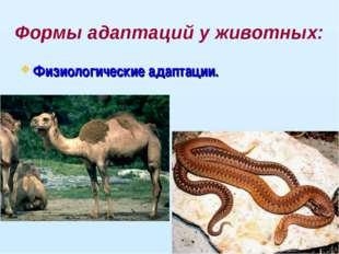 Формы адаптаций у животных: Физиологические адаптации.