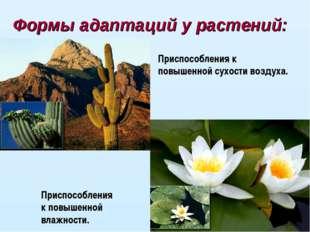 Формы адаптаций у растений: Приспособления к повышенной сухости воздуха. Прис