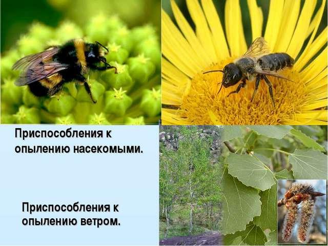 Приспособления к опылению ветром. Приспособления к опылению насекомыми.