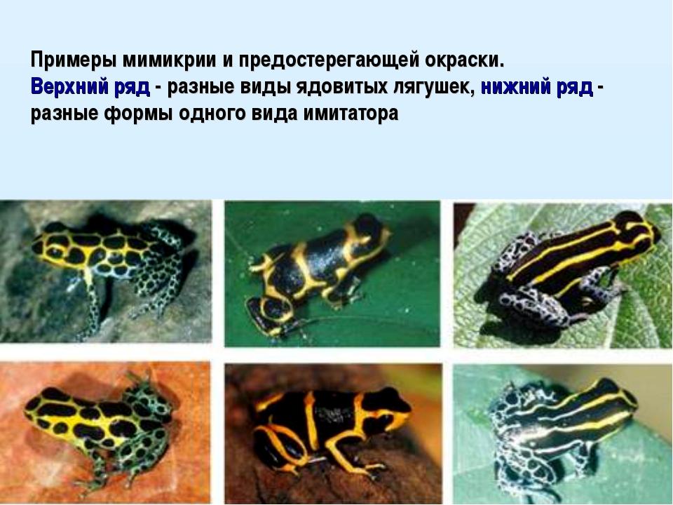 Примеры мимикрии и предостерегающей окраски. Верхний ряд - разные виды ядовит...