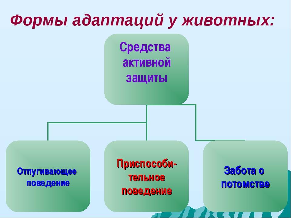 Формы адаптаций у животных: