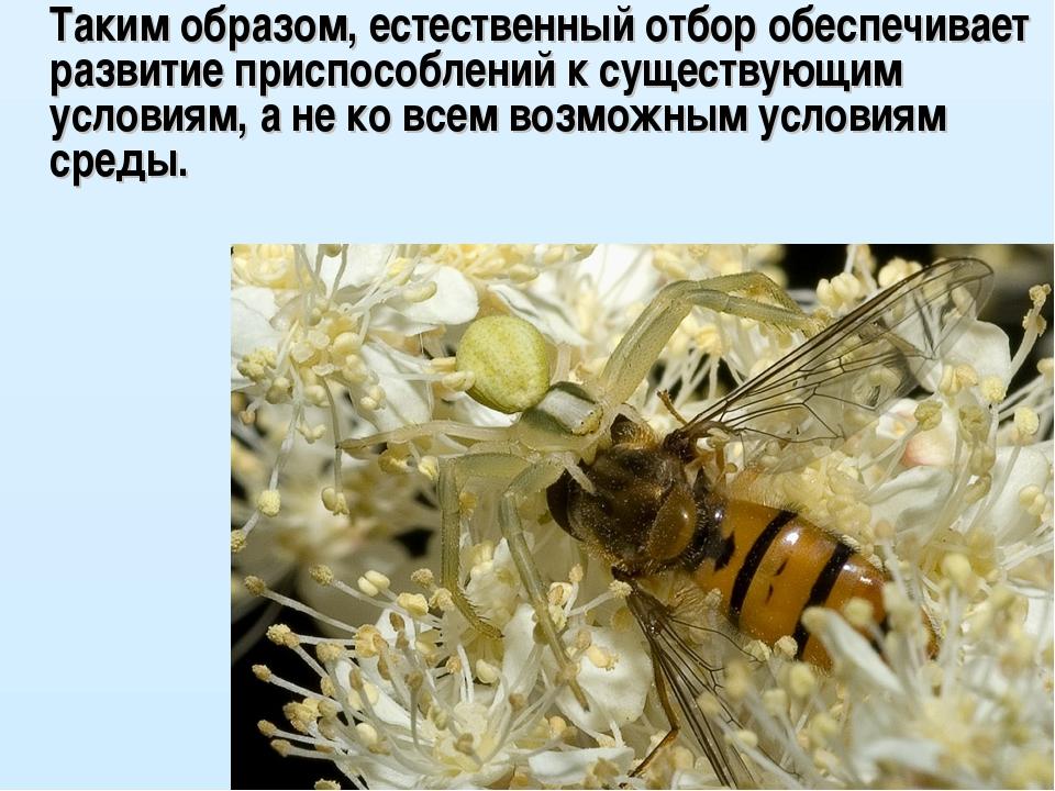 Таким образом, естественный отбор обеспечивает развитие приспособлений к сущ...