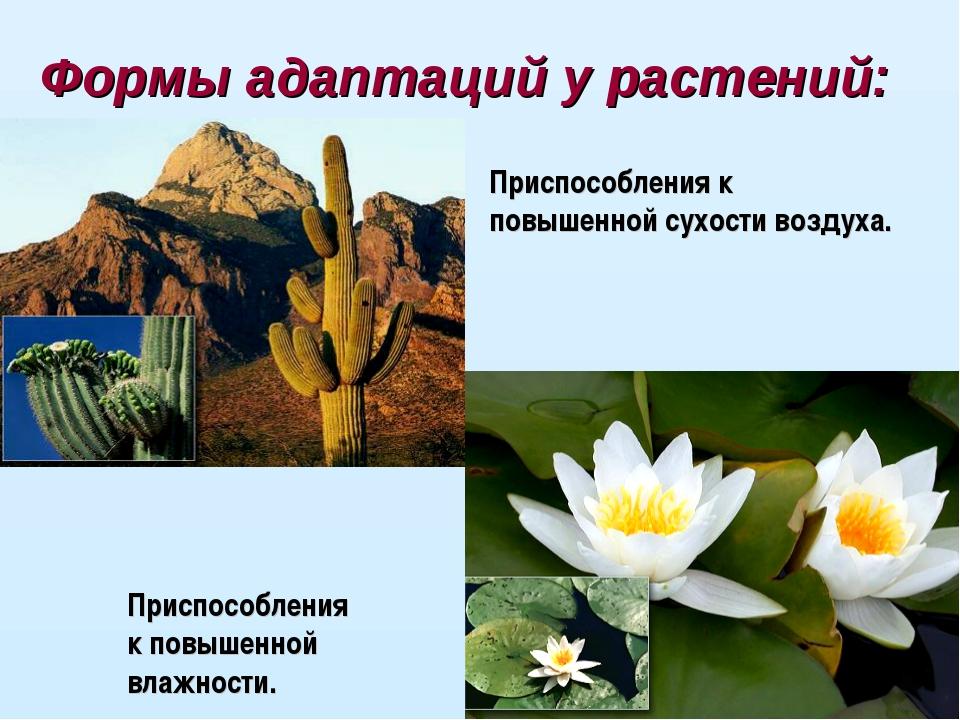 Формы адаптаций у растений: Приспособления к повышенной сухости воздуха. Прис...