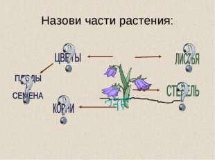 Назови части растения: