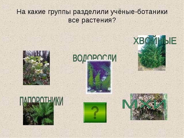 На какие группы разделили учёные-ботаники все растения?