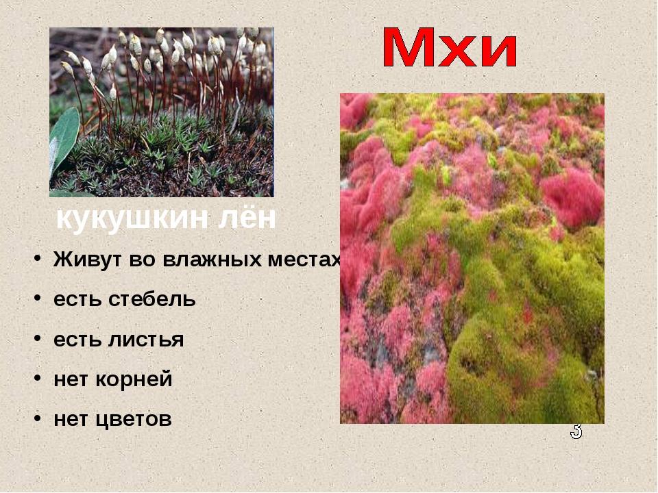 кукушкин лён Живут во влажных местах есть стебель есть листья нет корней нет...