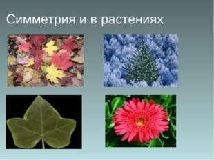 Симметрия и в растениях