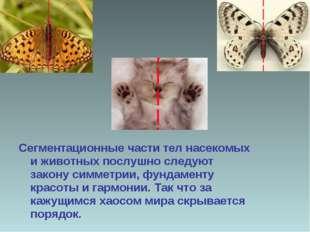Сегментационные части тел насекомых и животных послушно следуют закону симмет
