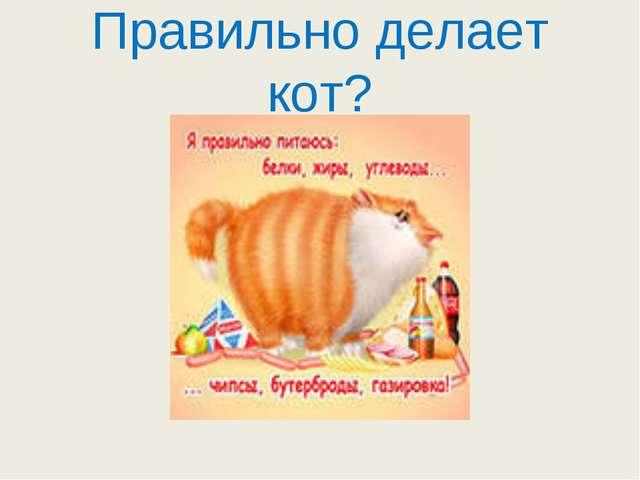 Правильно делает кот?