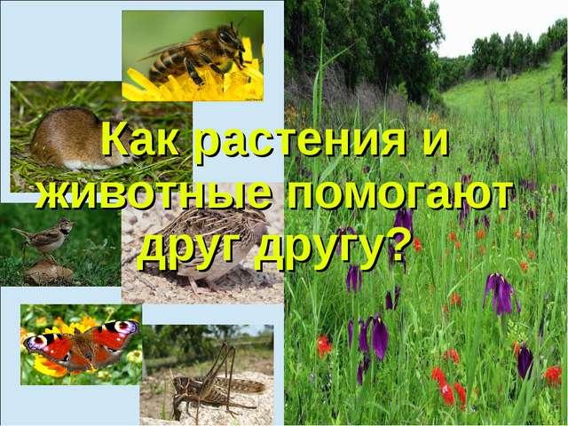 Как растения и животные помогают друг другу?