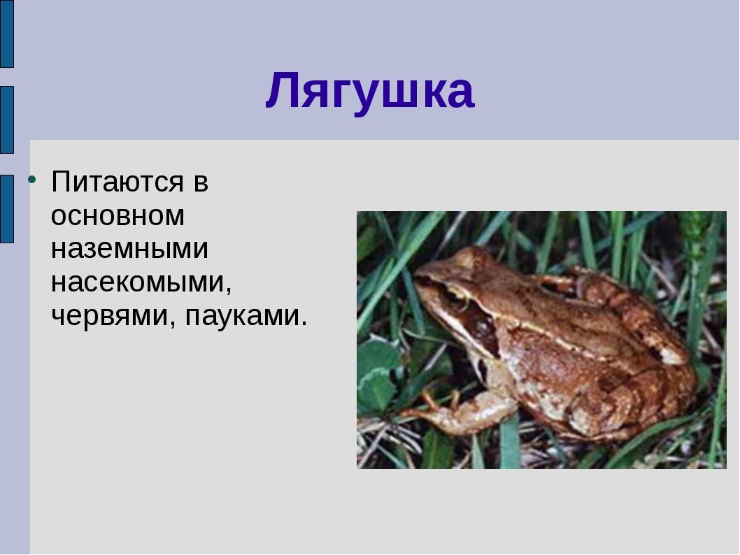 Лягушка Питаются в основном наземными насекомыми, червями, пауками.